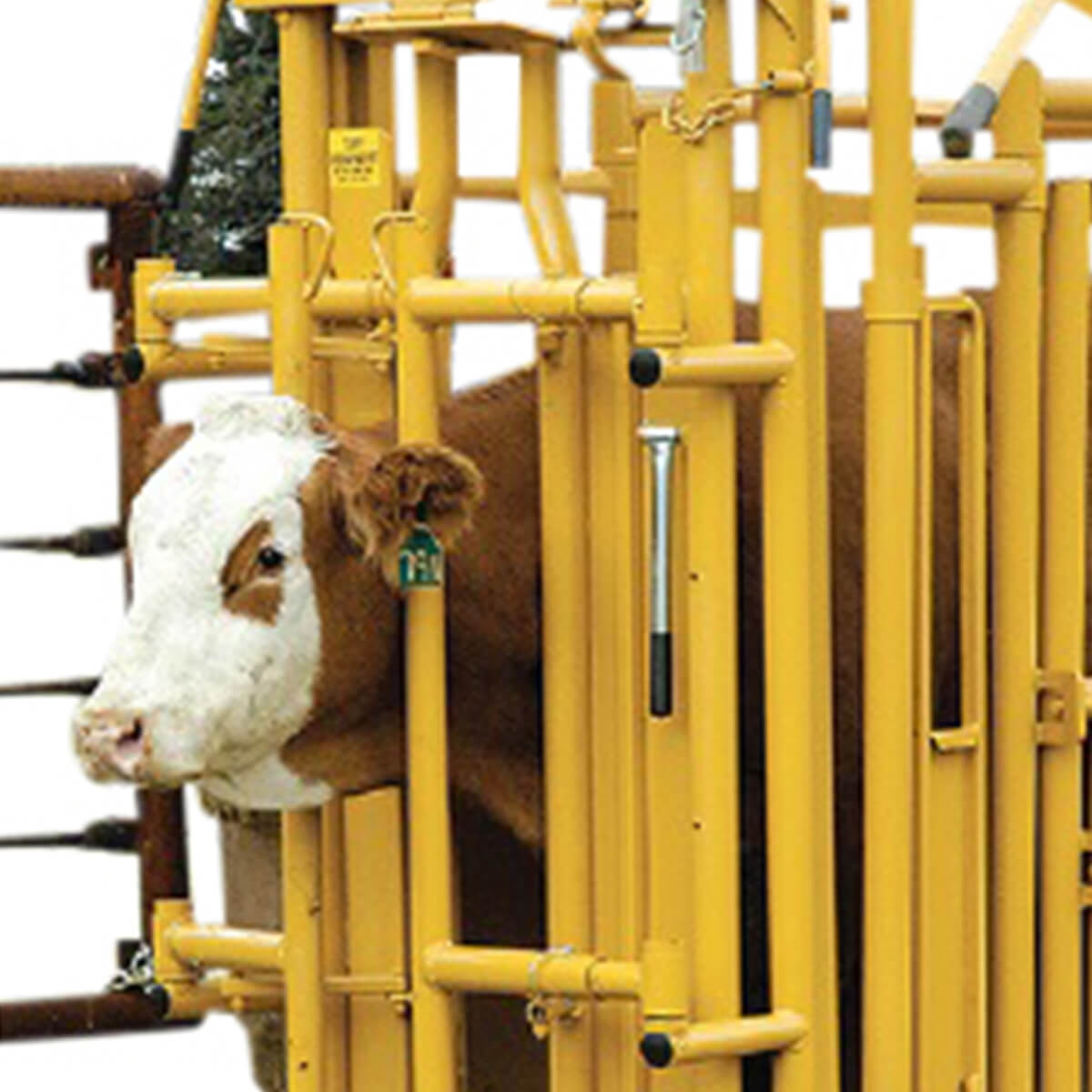 Tuff Self-Catch Head Gate with Neck Extender