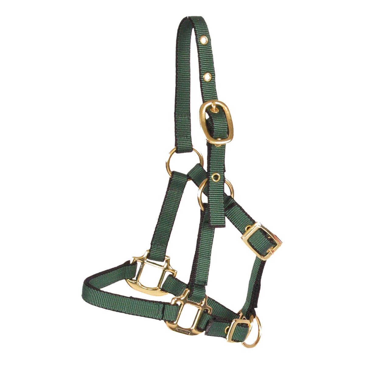 Horse Halter - Colt