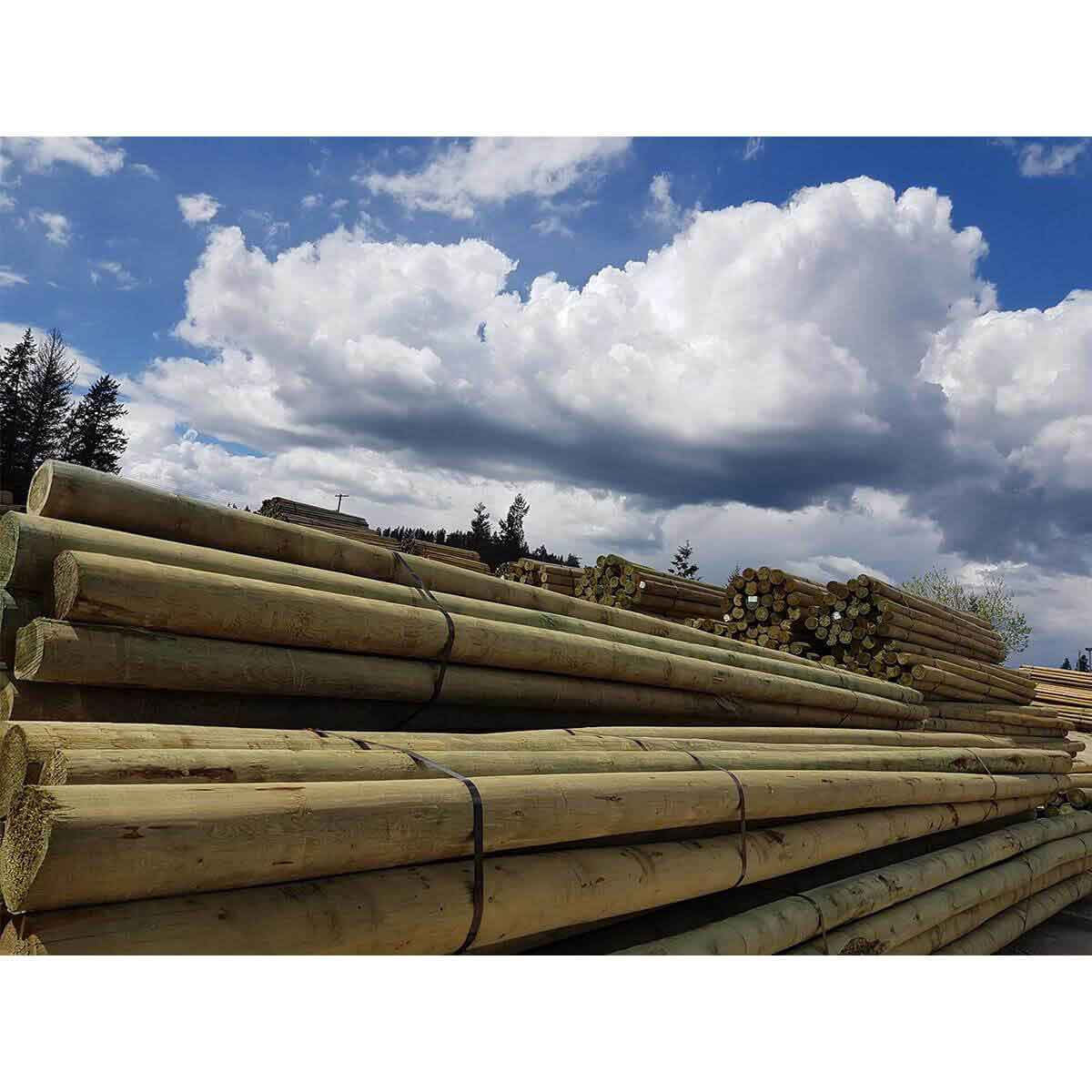 Peeled Fence Poles - Blunt - 6-in x 30-ft