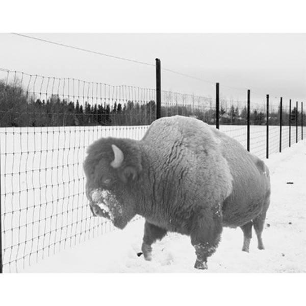 Buffalo Fence 5' x 660'